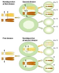 DIVISIÓN CELULAR | Desde Mendel hasta las moléculas