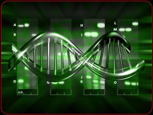 MUTACIONES PUNTUALES   Desde Mendel hasta las moléculas