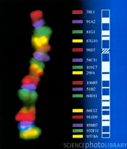g2101051-chromosomal_rainbow-
