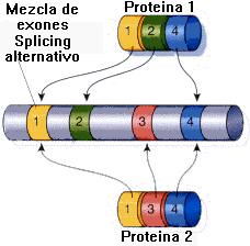 sacado de -bioinfromatica-uab-es