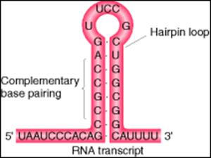 sec terminadora procariota