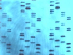 DNA-genetic-fingerprinting