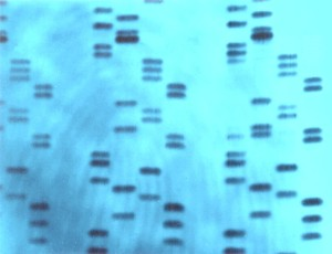 DNA-genetic-fingerprinting