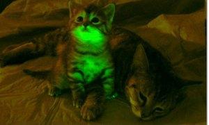 Cat Glow Fotografía: Mayo Clinic