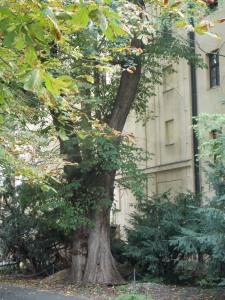 Jardín de la Abadía de Mendel