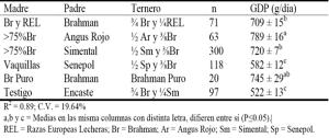 Ortega 4