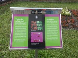 Explicacion de la segunda ley de Mendel con el color de las begonias