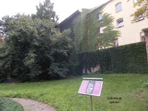 Patio trasero Abadia de Mendel para Blog