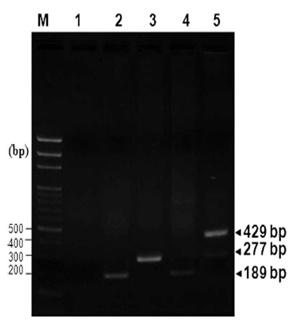 PCR 1 Vega