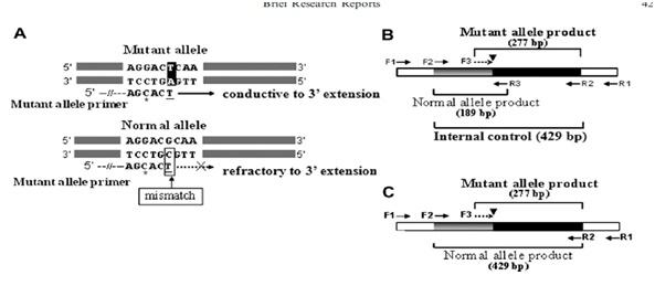 PCR polquistica renal
