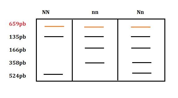 esquema monografia pss 3