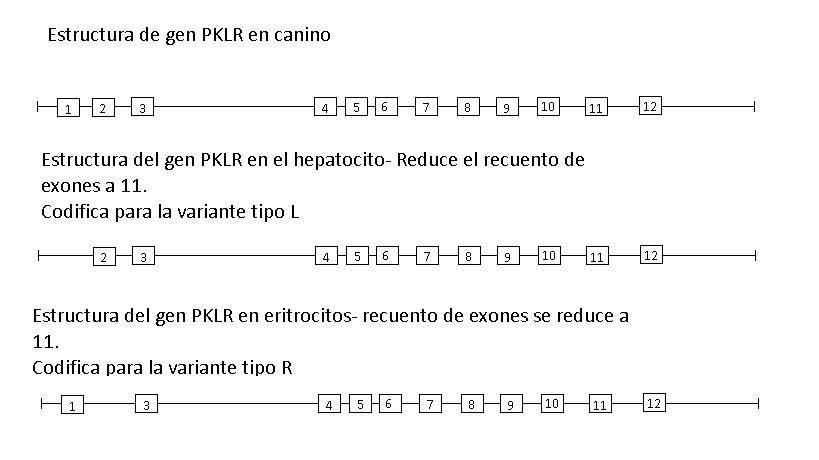 Figura 2 Genetica (2)
