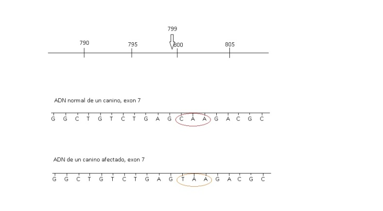 figura 4 genetica (2)