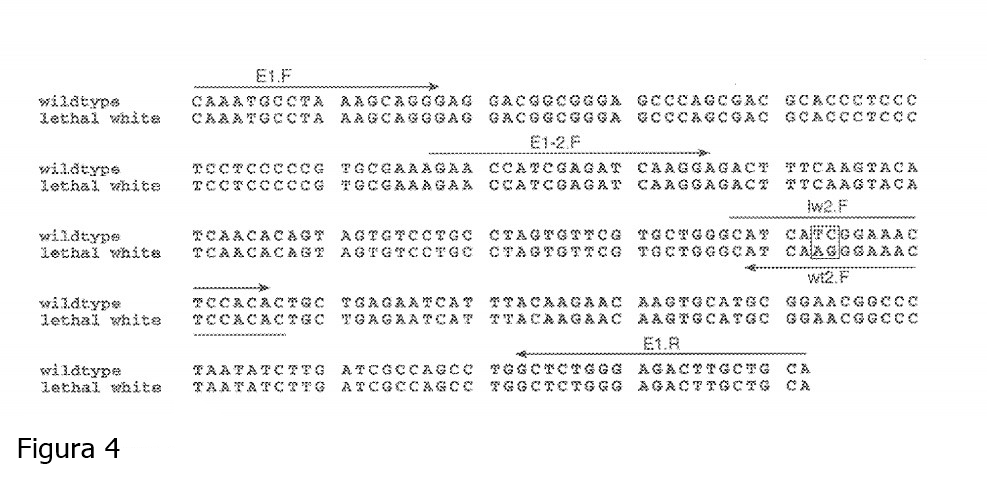 figura-4.jpg