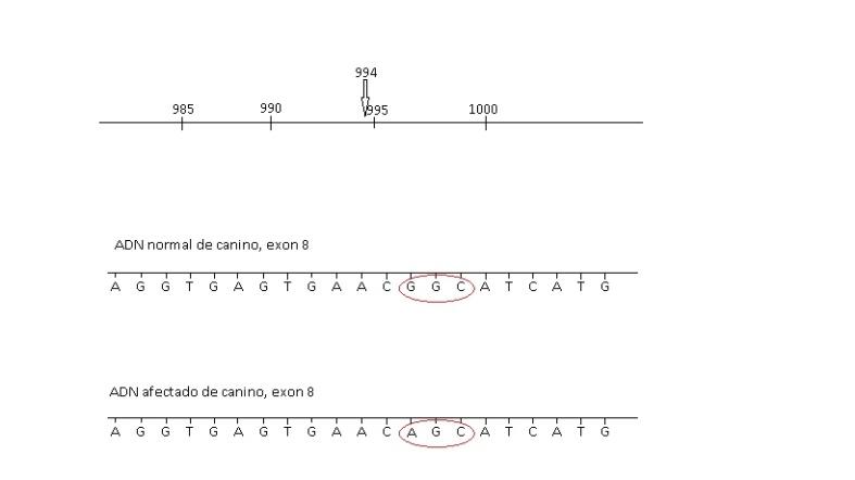 figura 6 genetica