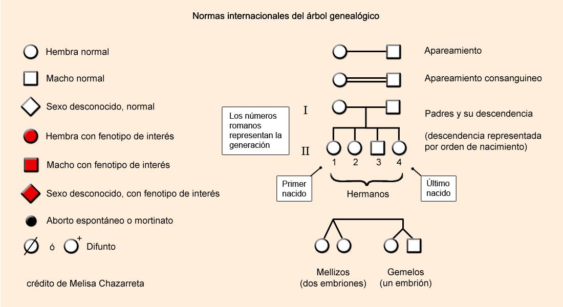 Árboles genealógicos: Notaciones universales, los círculos son hembras y los cuadrados machos, si están con algún color, quiere decir que tienen la característica que uno quiere analizar. Si es un rombo es de sexo desconocido.