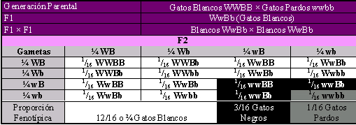 Apareamiento de di-híbridos con el gen W que inhibe al del color de base. Por Gabriela Iglesias