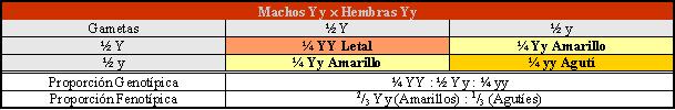 Apareamiento en híbridos del gen yellow (amarillo) y su descendencia Por Gabriela Iglesias