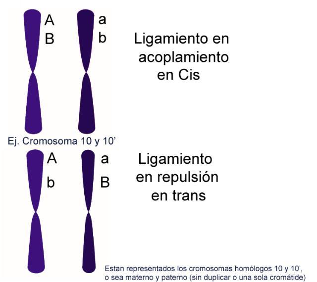 Tipos de ligamiento en acoplamiento o repulsión, Cis o trans.