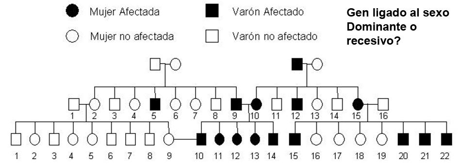 árbol genealógico en humanos pedigree de ucm . es mendelismo-complejo