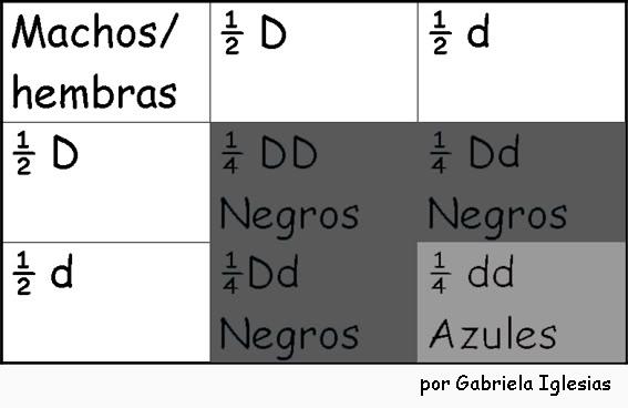 Punnet 2da ley de Mendel Por Gabriela Iglesias