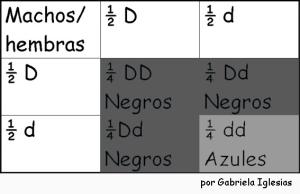 Punnet 2da ley. Forma ordenada de ver los posibles genotipos que se forman